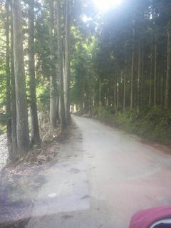 やぎ受け取り 山道2.jpg